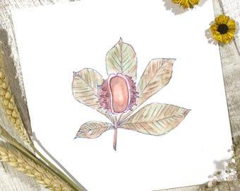 Horse Chestnut Print