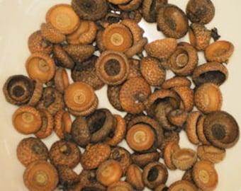 Acorns Caps | Dried Acorns | Bowl Filler | Natural Decorations