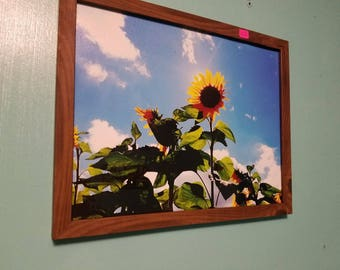Sunflower with Brown Frame