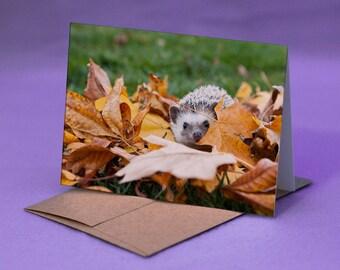 HEDGEHOG NOTE CARD - Hedgehog in Leaves Photo Note Card - Hedgehog Autumn Note Greeting Card - Fall Hedgehog Card