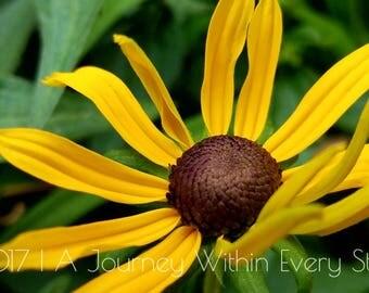 A Summer's Bloom