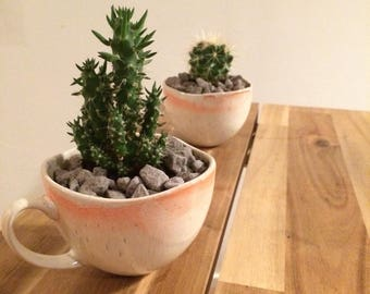Cactus in a cup