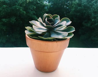 Succulent in Copper Terracotta Plant Pot