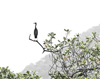 Costa Rica, Birds in Trees, Mountains