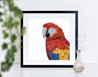 Scarlet Macaw - limited edition signed print, framed or mounted