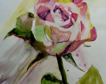 the last watercolor rose
