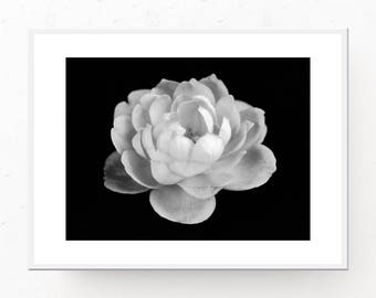 Rose Print - Black and White Print, Digital Art Print, Printable Wall Art, Contemporary Decor, Rose Photo, Contemporary Print, Flower Decor