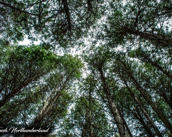 Nature Photography Trees Sky Print