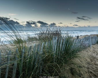 Weeds on the beach in La Cotinière (Charente Maritime)