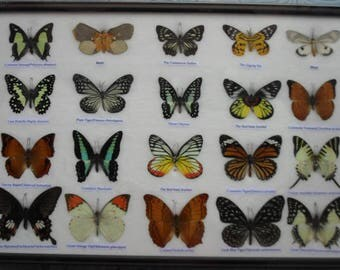 REAL 20 Butterflies Wall Decor Housewares Collectible TAXIDERMY Framed /BTF13J