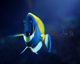"""""""Poster"""" Blue """"on background blue and yellow surgeon fish aquatic 20x20cm"""