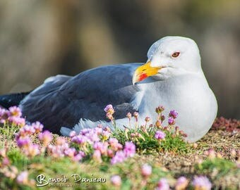 Photographs of gulls in the flowers (2)