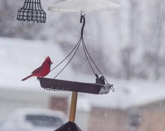 Cardinal and Dark Eyed Junco