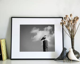 Seagull, Photographic Print, 5x7, 8x10