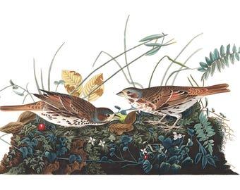 Audubon's Plate 108 Fox Colored Sparrow Cross Stitch Pattern