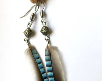 Blue Jay feather earrings