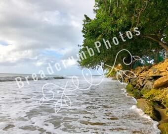 High Tide Paradise