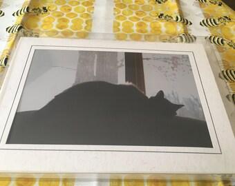 Greeting Card Set - 5pk Cats