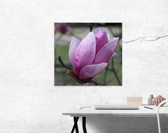 wall art, canvas art, cherry blossom, cherry blossom canvas art