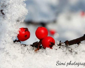 Photo print 'Berries in winter' 50% of the profit will go to homeless/neglected animals