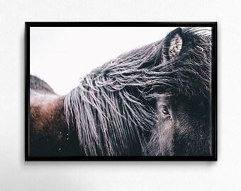 Black Horse Photography