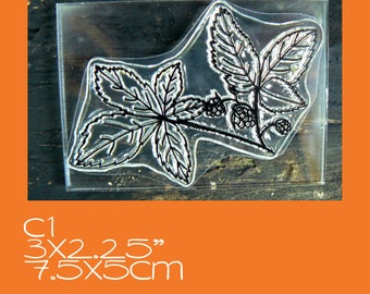 C1 Blackberry Plant rubber stamp Clear Mounted