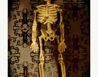 ONSALE Creepy Skeleton Lot 3 of My Beautiful Bella No 7