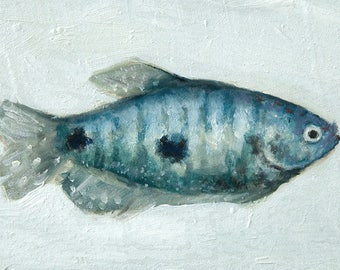 Tropical Blue, Green, Gourami, Gouramis, Fish Painting, Original Painting by Clair Hartmann
