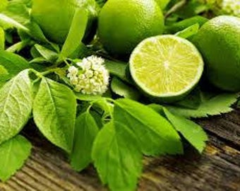 French Lime Blossom TYPE scented products /  Shea Butter Soap, Lotion, Sugar Scrub or Body Mist