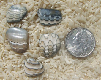 5 Small Size Fossilized Clamshells