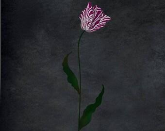 Flemish Tulip Large Flower Stencil - DIY Wall Art - Easier Than Wallpaper