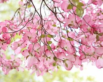 Pink Dogwood photograph, fine art print, tree, flowers, spring home decor,nature,Shabby chic home decor,wall art