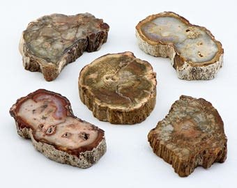 Petrified Wood Gemstone - Stone of the Earth's Energies
