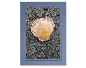 Seashell Cards - Cockle Shell Cards - Beach Cards - Sea Shell Cards - Cards of Seashells - Sandy Beach Cards - Coastal Cards