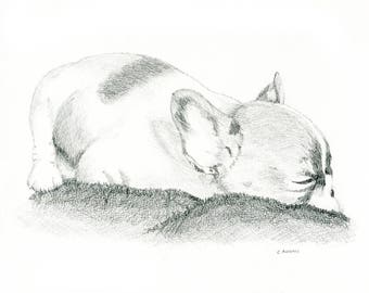 French Pug Puppy Pencil Sketch 8 x 10 inches