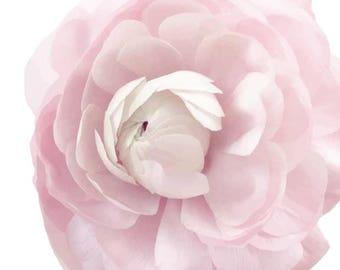 Ranunculus Soft Pink Garden Flower   - Vinyl Decal Wall Décor