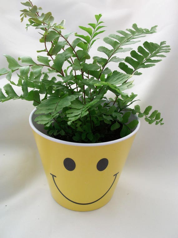 Smiley Face pot cover with a Mahogany tropical fern is on Special sale.