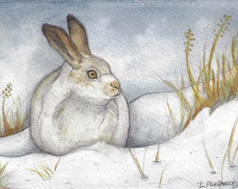 Snow Shoe Hare.....Original 5x7 Watercolor Art