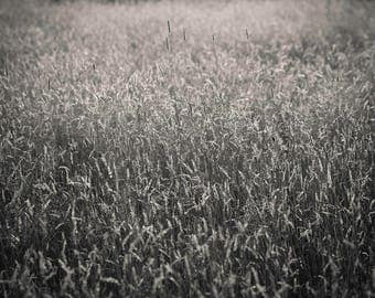 summer field, 8x10 fine art black & white photograph, nature