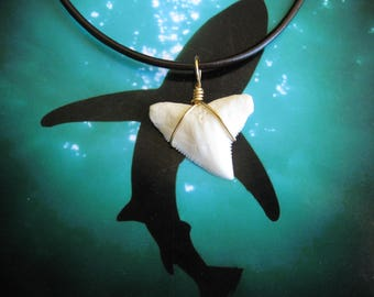 Bull Shark Tooth Necklace