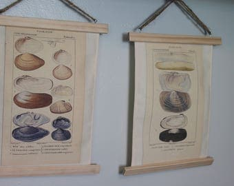 Shell pictures, set of two shell naturalist picture, home decor, Printed on Canvas