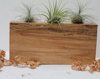 Spalted Maple Air Plant Holder M06