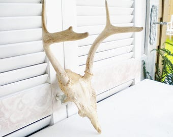 Real Antlers Vintage Deer Antlers,Large Antlers 4 Point/Wall Decor/Rustic Wedding/Farmhouse Home Decor/Man Cave/Refinishing Project