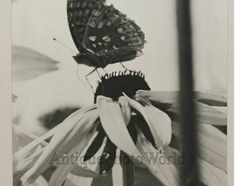 Butterfly on flower vintage close up photo