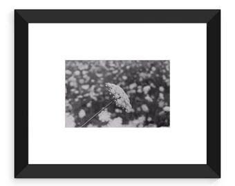 Silent flower - Framed print from Secrets of nature