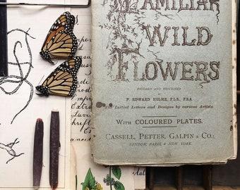 Familiar Wild Flowers..1880