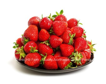10 - 1000 Albion Ever Bearing Strawberry Plants - CERTIFIED Healthy Bare Root Dormant Plants - Free Shipping!