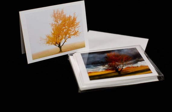 Boxed Set of 6 Blank Cards Seasons of the Shaw Tree