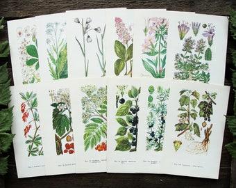 Mix Medicinal Plants - Set of 12 Vintage Botanical Book Pages, 1973. Herbaceous Drug Flower Illustration Print Scraps Collage Paper Ephemera