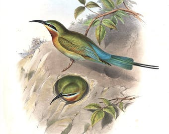 Gould Birds of Asia I-36 Philippine Bee-eater, Museum Quality Limited Edition print, original size 38x56cm, signed, numbered
